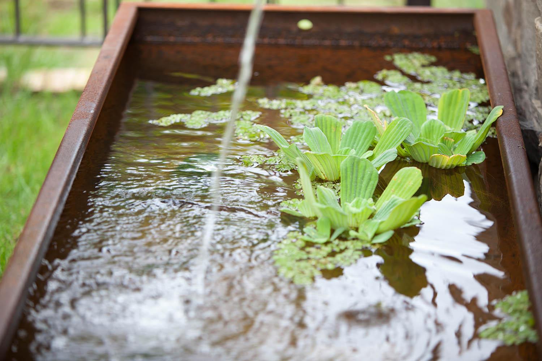 Brunnenbecken aus Cortenstahl mit Wasserpflanzen.